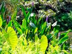 Botanical gardens Durban