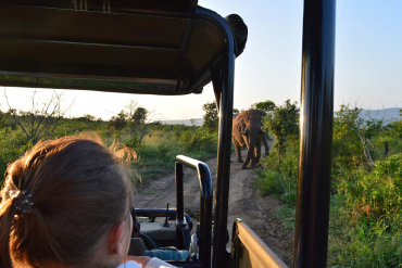 Game drive in Hluhluwe National Park