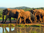 Elephants at Hluhluwe iMfolozi South Africa