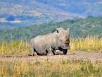 Hluhluwe iMfolozi Park Rhino