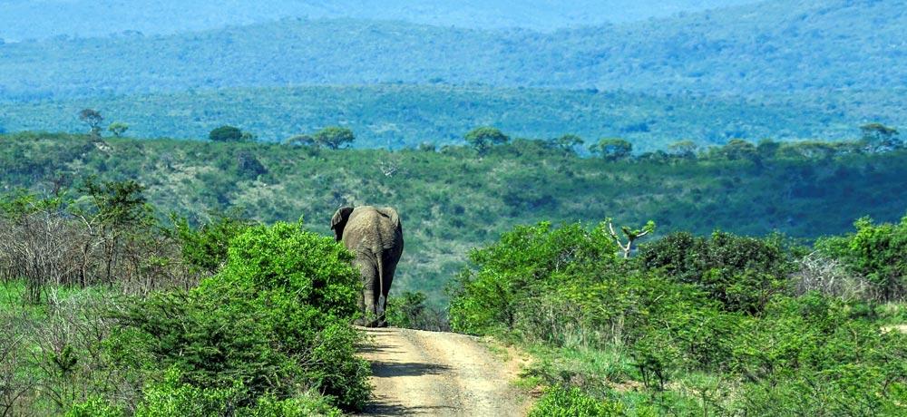 Elephant Hluhluwe-Imfolozi Park